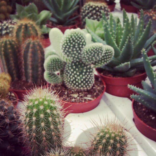 Mycoolcactus el proyecto desde cero enmimetrocuadrado for Vivero de cactus