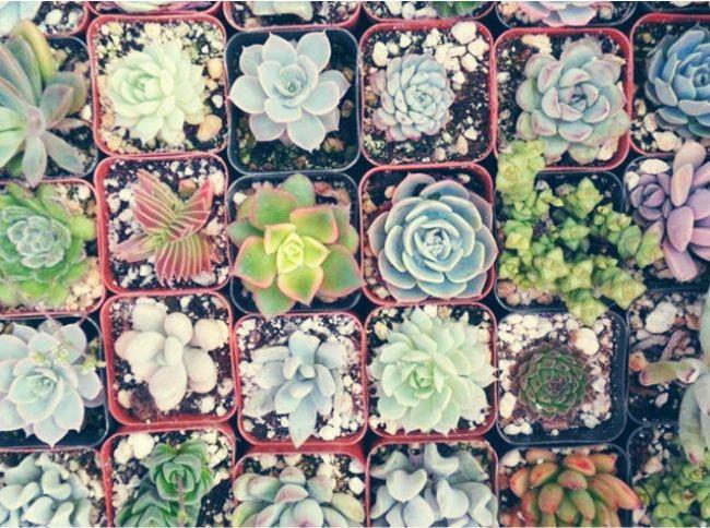 Suculentas ese extra o cactus enmimetrocuadrado for Jardines pequenos horizontales